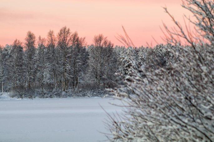 Talvea01