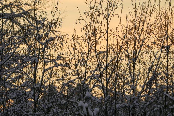 Talvea05